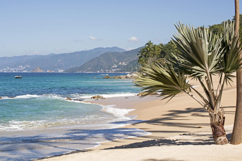 Palm tree on beach of Puerto Vallarta in Bahía de Banderas, Mexico's West Coast